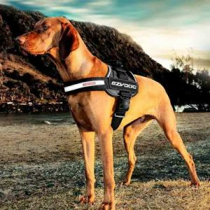 ezydog trail ready convert big dog harness
