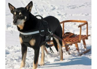 k9 harness julius power for dogs
