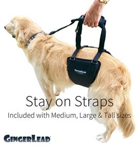 rehabilitation harness support sling gingerlead review