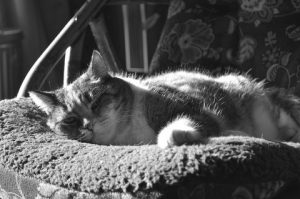 black and white pic kitten lying on rocking chair