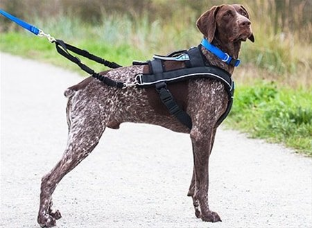 ultimate canine pulling harness review