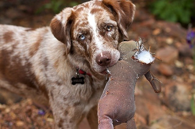 dog wreck stuffed soft toy