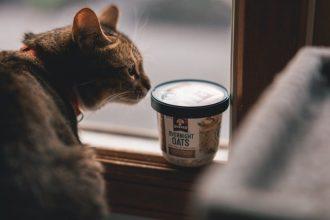 cat looking at tub