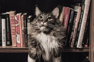 naighty cat on shelf