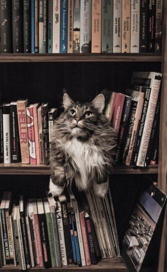 naughty cat on shelf