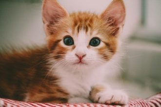kitten on carpet