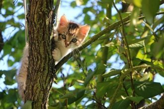 lost cat in a tree