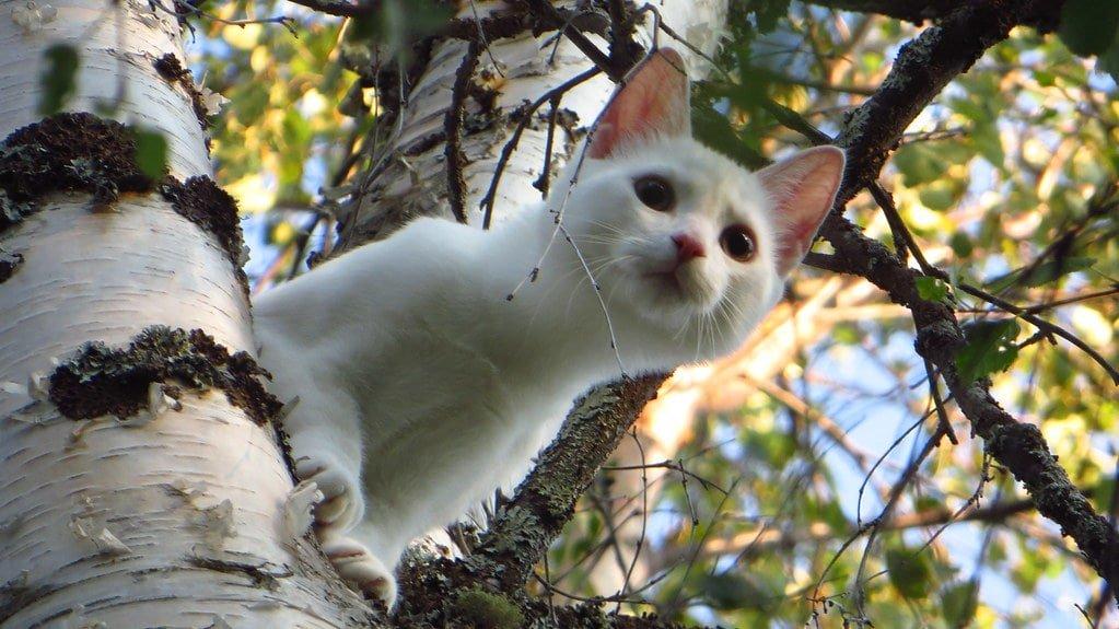 feline is high up on the tree