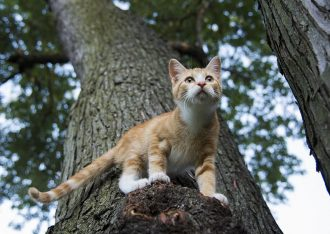 my cat is up on tree