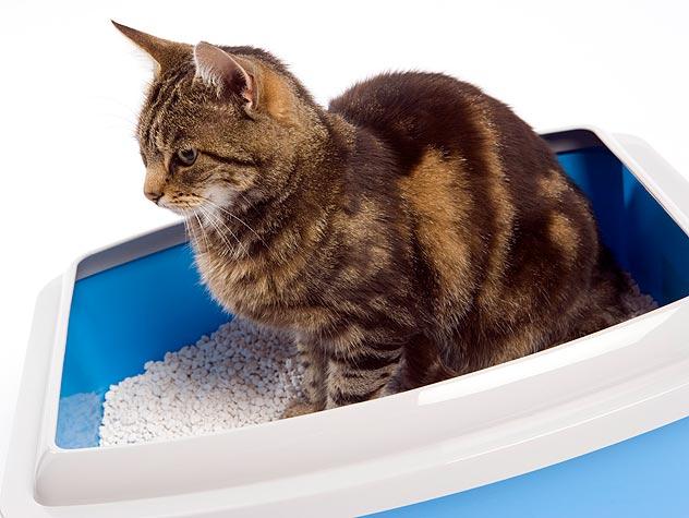 Deep cat litter box