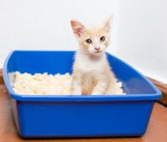 Kitten on Litter Box