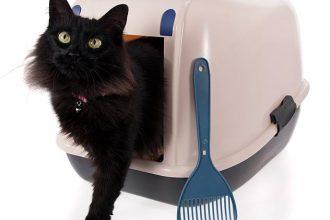 Best Dog Proof Cat Litter Box