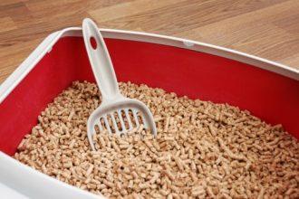 Best Corn Cat Litters