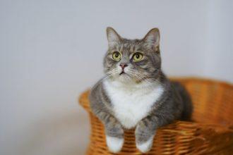 Best Cat Litter Attractant Reviews