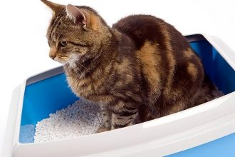 best cat litter for heavy urination