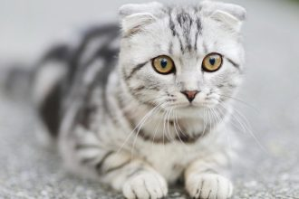 best cat litters for cats with asthma