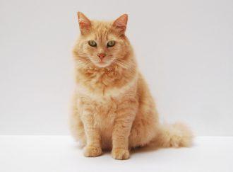 Kitty Poo Club Cat Litter