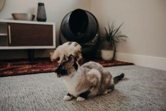 cat litter robot accessories