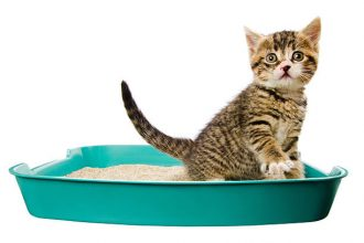 why cats sleep in the litter box