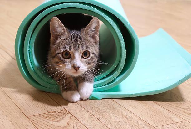 cat in a rolled mat