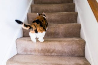 steps for cats with arthritis