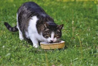 Should My Cat's Bowl be Raised?