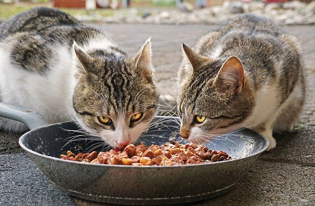 Improves cat's posture when eating