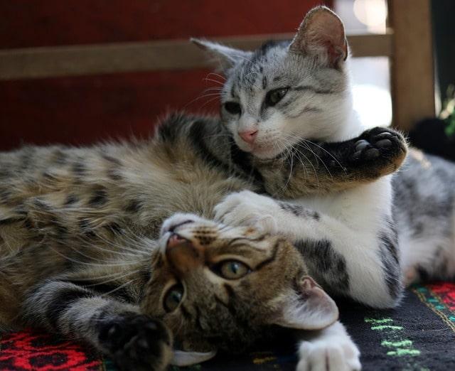 kitties playing sun