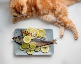 cat watching a plate with fish and lemon