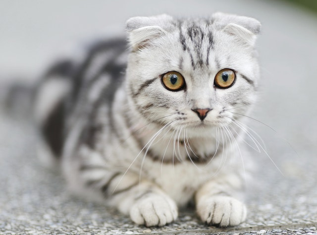 petlibro automatic cat feeder programming